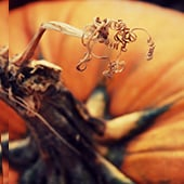 photo editor pumpkin